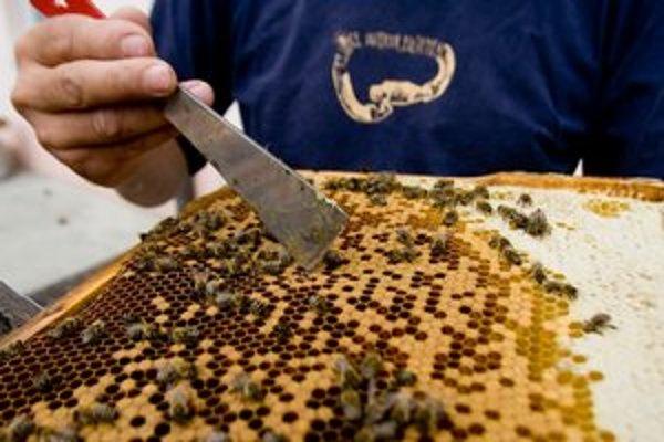 V Bratislave je zaregistrovaných zhruba dvesto včelárov, väčšina z nich je už na dôchodku.