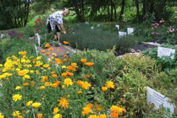 O bylinkovú záhradku sa starajú ženy z miestneho klubu Včielka.