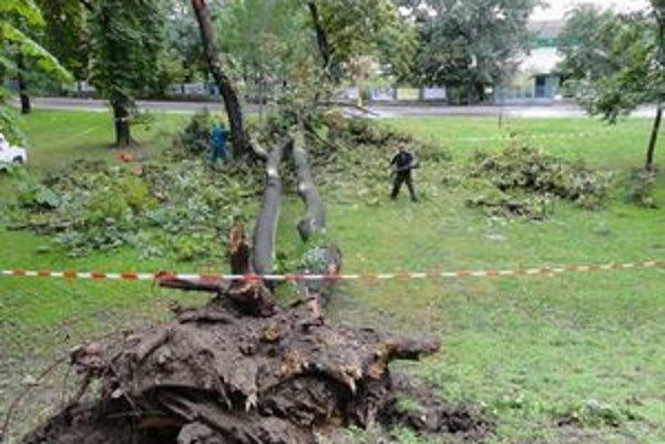 Pracovníci odstraňujú spadnutý strom.