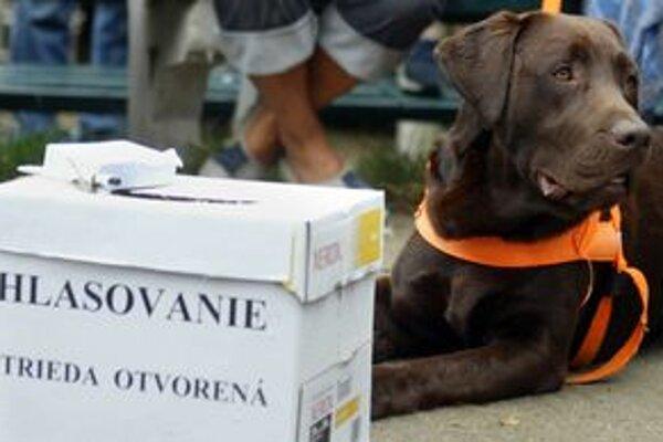 Psíky zo Starého Mesta každý rok súťažia o titul Pes sympaťák. Súťažiť môžu iba tie, za ktoré majitelia platia dane.