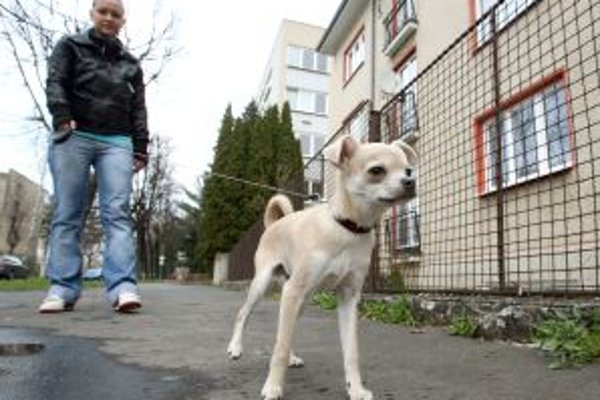 Pohyb psov v meste má svoje pravidlá. Za priestupky hrozí ich majiteľom pokuta.