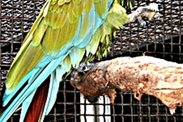Papagáje zazimujú. Kedy ich opäť ukážu, závisí od toho, kedy príde ďalšia jar.