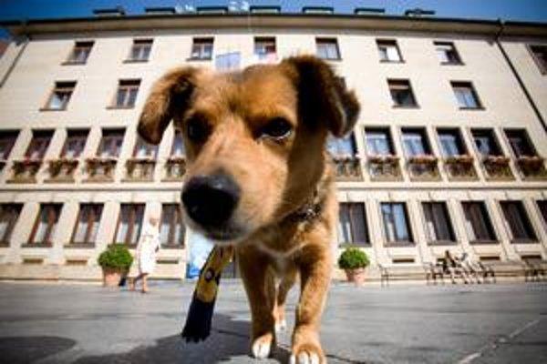 Prihlásený pes musí mať registračnú známku.
