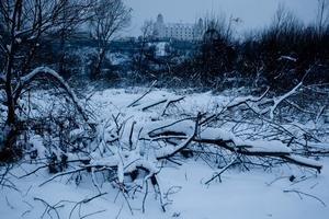 Pečniansky les, ťažba v ňom je povolená. Ochranári ho chcú vyhlásiť za chránený areál