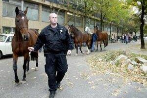 Bratislava má vďaka náborovej kampani 24 nových policajtov. Posilnili každú okrskovú stanicu a aj stanicu jazdeckej polície.