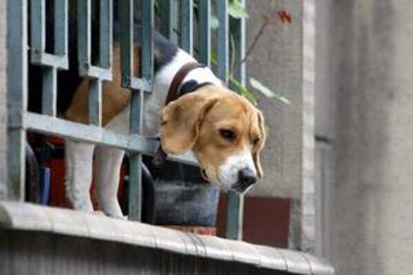 Daň za psa mali do začiatku februára zaplatiť majitelia psov starších ako šesť mesiacov
