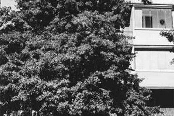 Lipa na Palisádach je stromhrdina roka 2003.