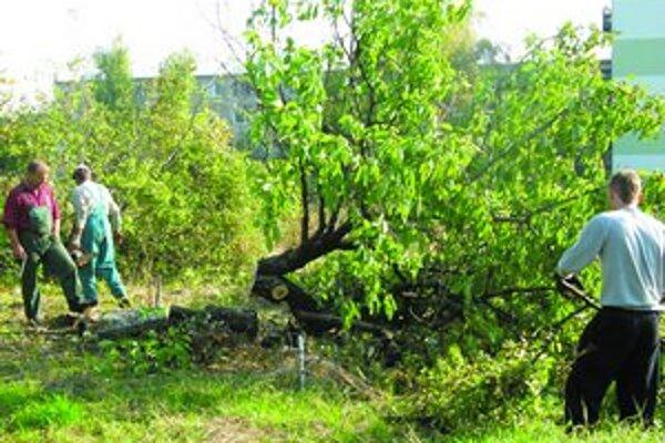 Pred týždňom sa obyvatelia snažili zabrániť výrubu stromov na pozemku, kde investor plánuje výstavbu. Ukázalo sa, že výrub bol povolený.