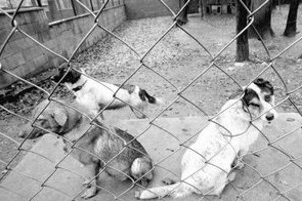 Vo vonkajších kotercoch majú psy zateplené búdy. Pracovníci útulku žiadajú ľudí o staré koberce, deky a matrace.
