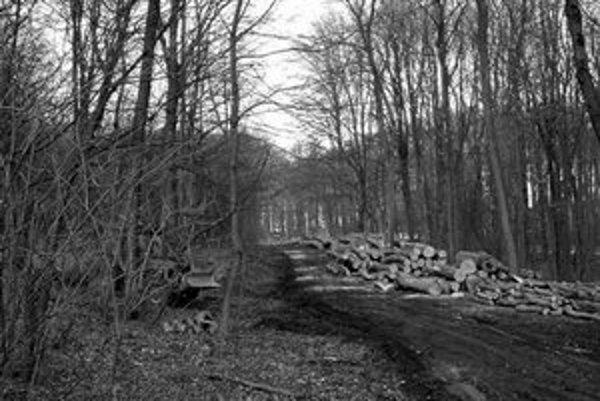 V lesoparku sa rúbu len staré a veľké stromy, pretože sa tak uvoľňuje priestor pre mladé.