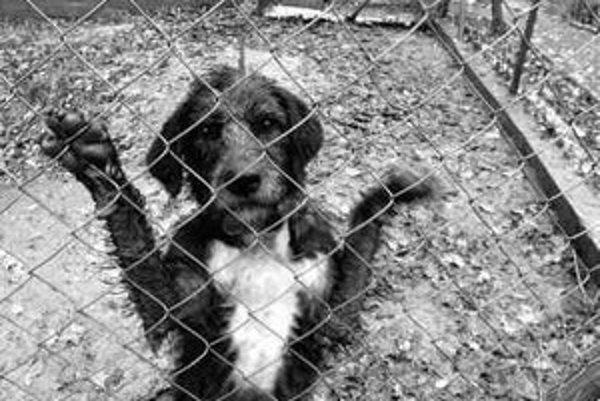 Kapacita útulku pre opustené zvieratá na Poliankach nestačí. Koterce zaberajú najmä väčšie plemená psov.