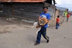 V osadách na Spiši začali s pravidelnou kastráciou zvierat