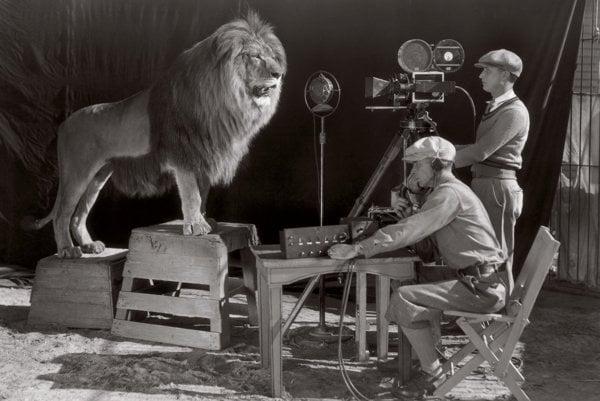 """Prvý lev """"Leo the Lion"""" z Metro-Goldwyn-Mayer sa volal Jackie a uvádzal pôvodne ešte nemý film z roku 1928."""