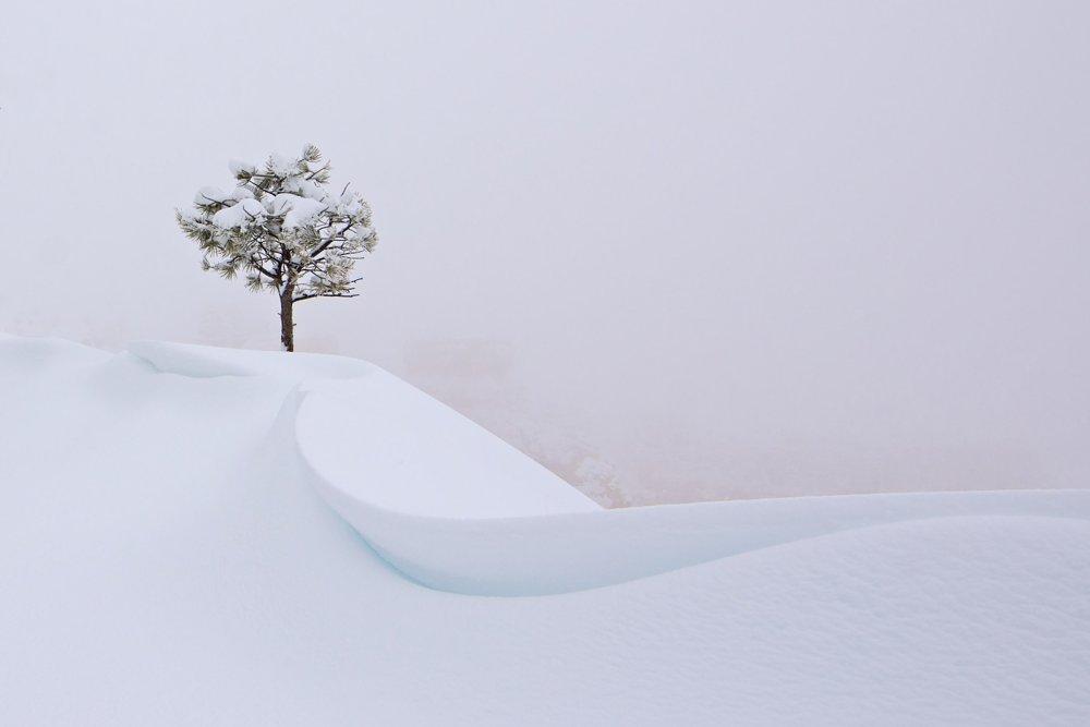 Snehový strom. Počas snehovej búrky v kaňone Bryce v americkom Utahu viditeľnosť klesla takmer na nulu. Potom som zbadala tento strom uprostred závejov.