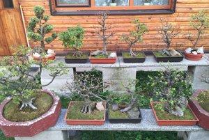 Peter Ďureje už svoje bonsaje na výstavách neprezentuje.