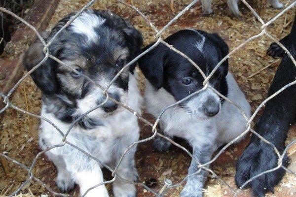V združení prijmú pomoc každého, komu na psíkoch záleží.