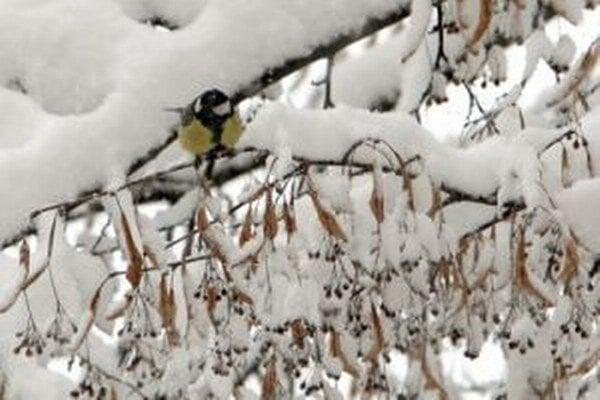 Tento záber vznikol 29. marca 2013. Počas Veľkej noci napadlo neobvykle veľa snehu.