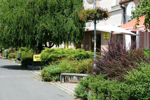 Horúčavy si vyžadujú zvýšenú starostlivosť aj o okrasné rastliny v uliciach.