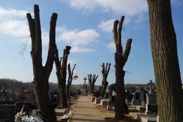 Orezané stromy na cintoríne v Štefanove.