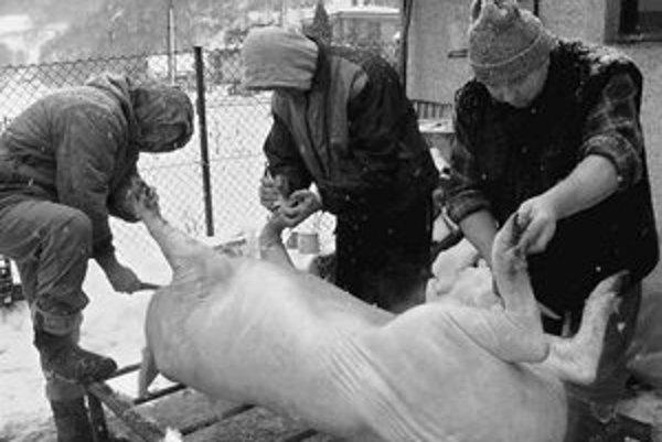 Ľudia budú musieť ohlasovať domáce zabíjačky a odovzdávať vzorky z nich veterinárnej správe.
