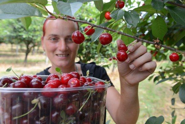 V rámci predaja z dvora je možné predávať aj vlastnú úrodu ovocia.