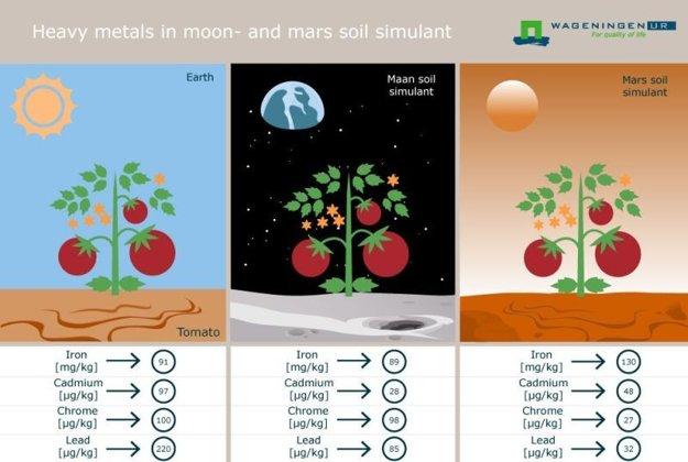 Obsah železa, kadmia, chrómu a olova v paradajkách vypestovaných v nehodnotnej pôdy zo zeme a simulovaných zeminách z Marsu a Mesiaca.