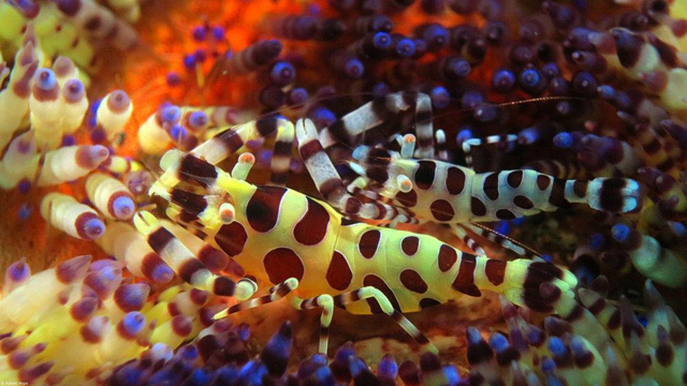 Tropické more ukrýva rôznorodý a pestrofarebný život.