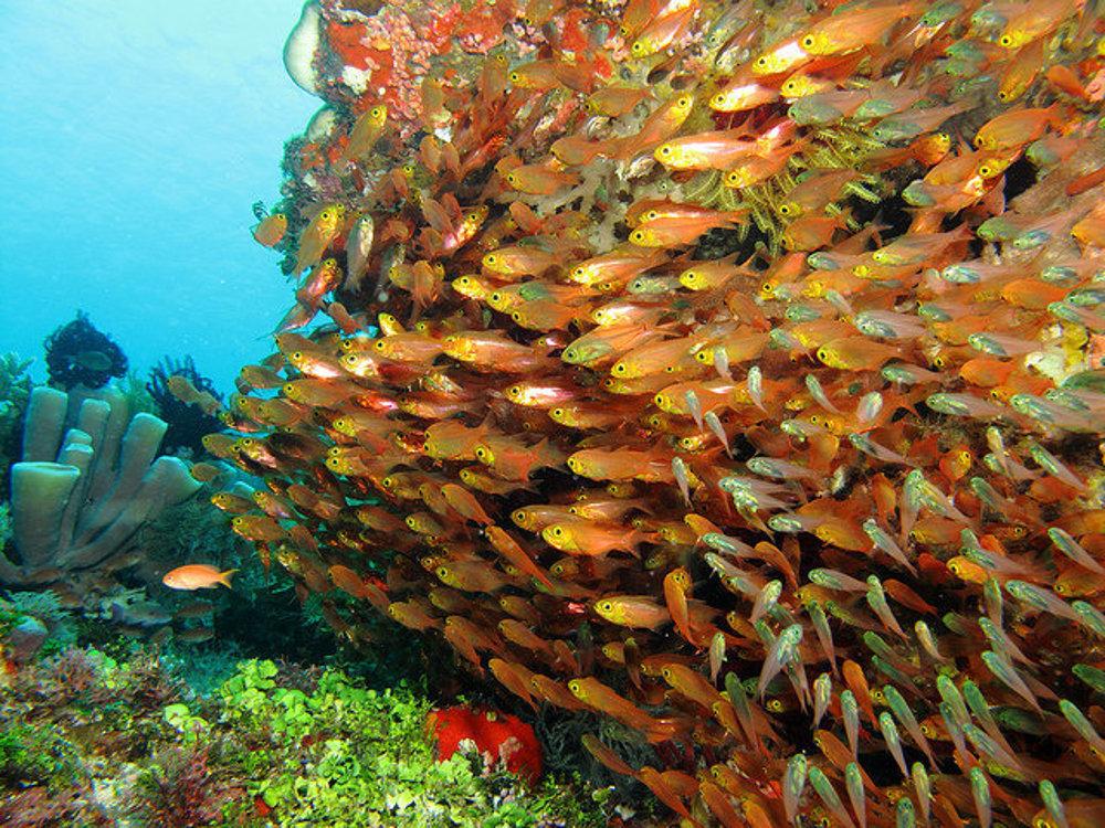 Oranžové more v azúrovom mori.