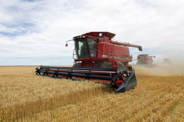 Pšenica, ktorú nakupoval štát cez dílera, pochádza od slovenských farmárov.