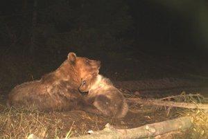 Medvedica nedokáže opustiť svoje mladé.