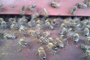 Včely idú zimovať.