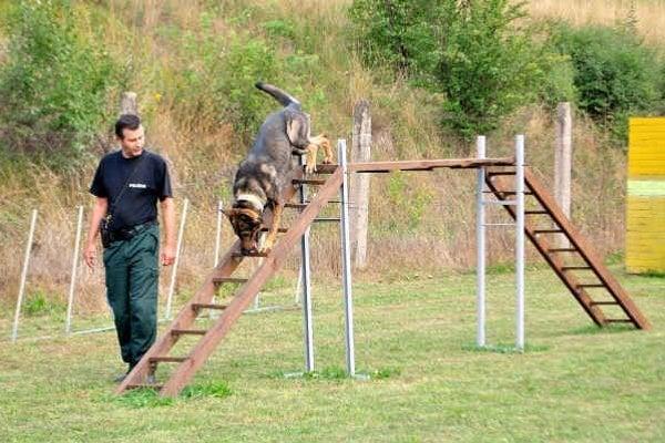 Psovodi. Služobných psov testovali na cvičisku v Starej Ľubovni.