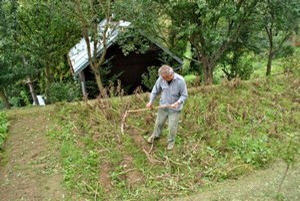 V týchto dňoch záhradkári začínajú zbierať úrodu.