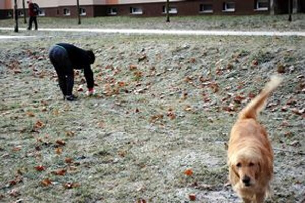 Za psa chovaného v byte zaplatia majitelia v budúcom roku menej.