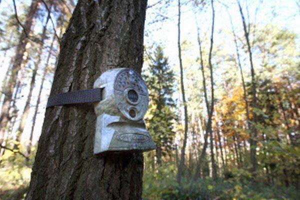 Fotopasce sú využívané aj v lesoch pri monitorovaní zvierat.