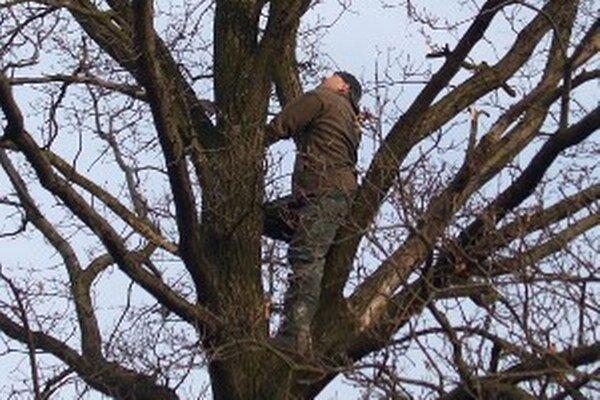 Zariadenie na monitorovanie kuvika sa často skrývalo v korunách stromov.