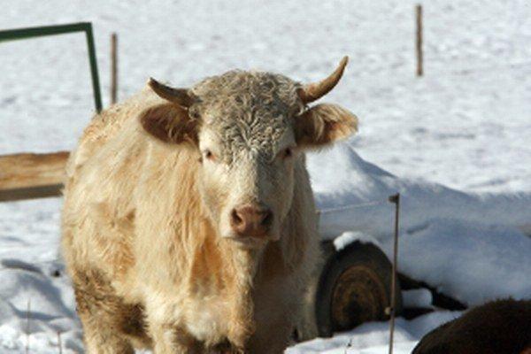 Pre vegánov zvieratá nie sú potrava, ale cítiace bytosti s právom na život bez utrpenia.