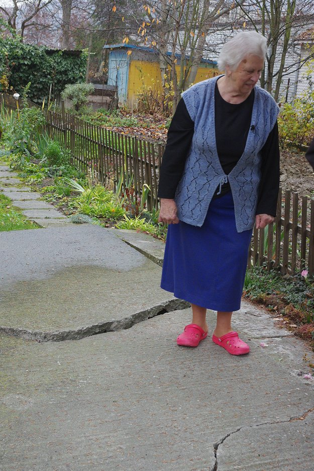 Hrubé korene zničili už chodník tesne pri dome. Boja sa, aby nenarobili aj viac škody.