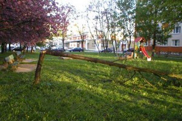 Nevypiľovanie stromov v minulosti spôsobilo viaceré problémy.