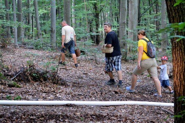 Plný les hubárov. Počasie vyhnalo ľudí na huby.
