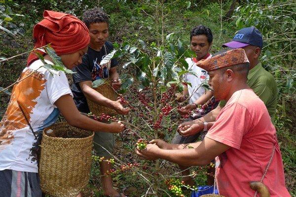 Floreskí farmári sa učia pestovať kávu efektívne, aby ich to uživilo.