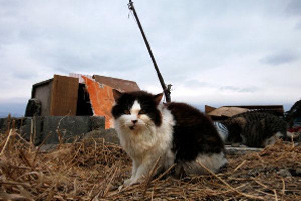 Prievidza plánuje pre pouličné mačky kastračný program.