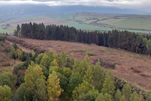 Inšpekcia potvrdila, že podnikateľ vyrúbal veľké borovice z pozemkov naľavo od lyžiarskeho vleku.