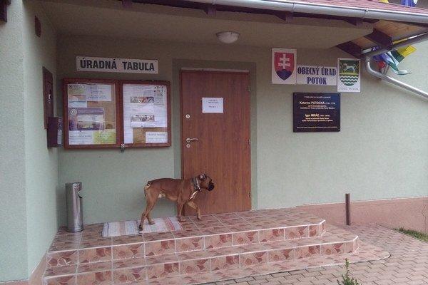 Priebeh volieb v Potoku stráži pred volebnou miestnosťou boxer.