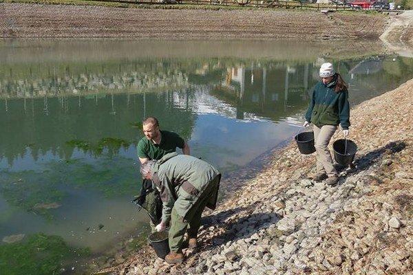 V technickom jazierku na Bielej Púti si našli domov žaby.