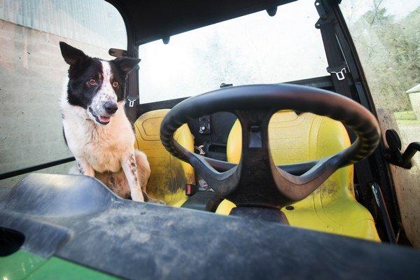Pes Don za volantom traktora.