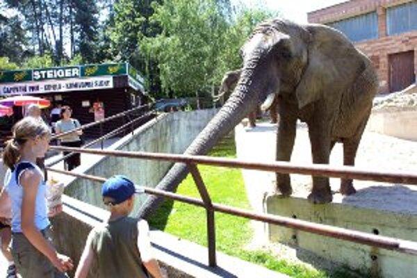 Do zoo prišlo viac návštevníkov ako vlani.