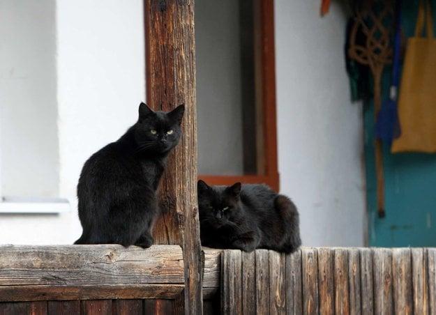 Mačkám sa na Chlpe žije dobre.