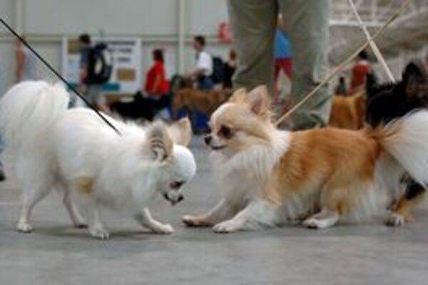 Pokiaľ pes nie je vo vyhradenom priestore, mal by byť na vôdzke.