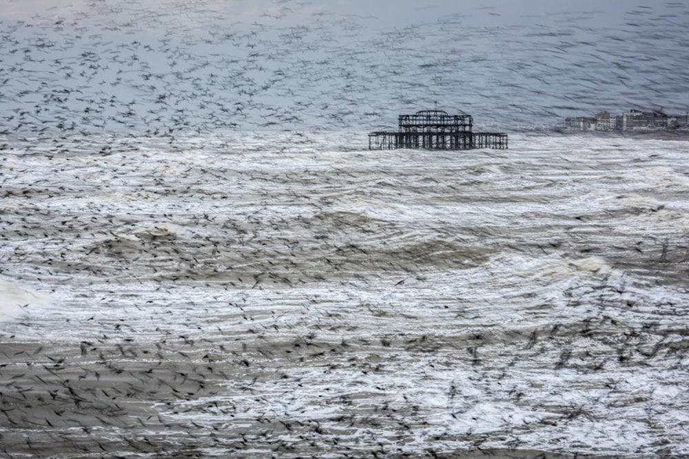 Kŕdeľ škorcov. Brighton, East Sussex, Anglicko
